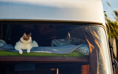 7 Must Haves for RVing with Cats
