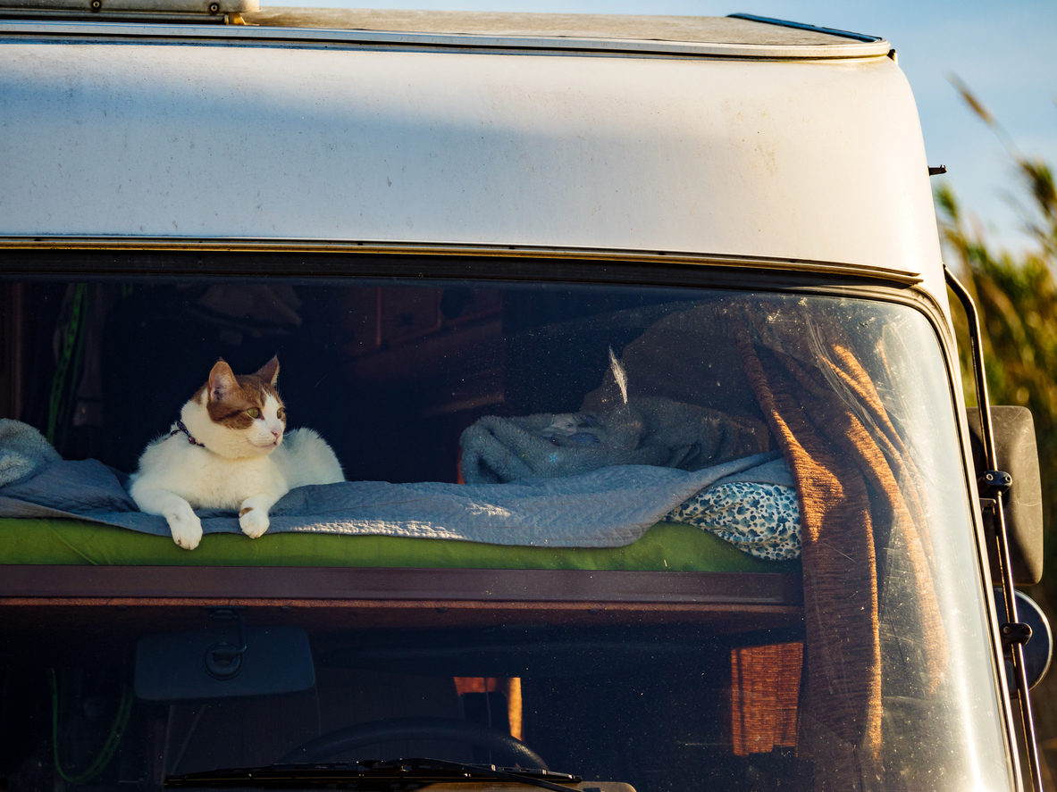 RVing with cats: cat lays in window of camper