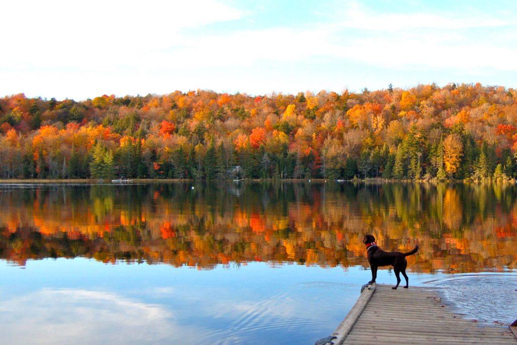 Dog overlooks a lake in the Adirondacks