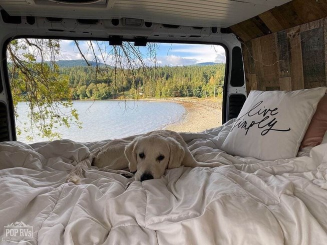 Dog sits on a conversion van for sale