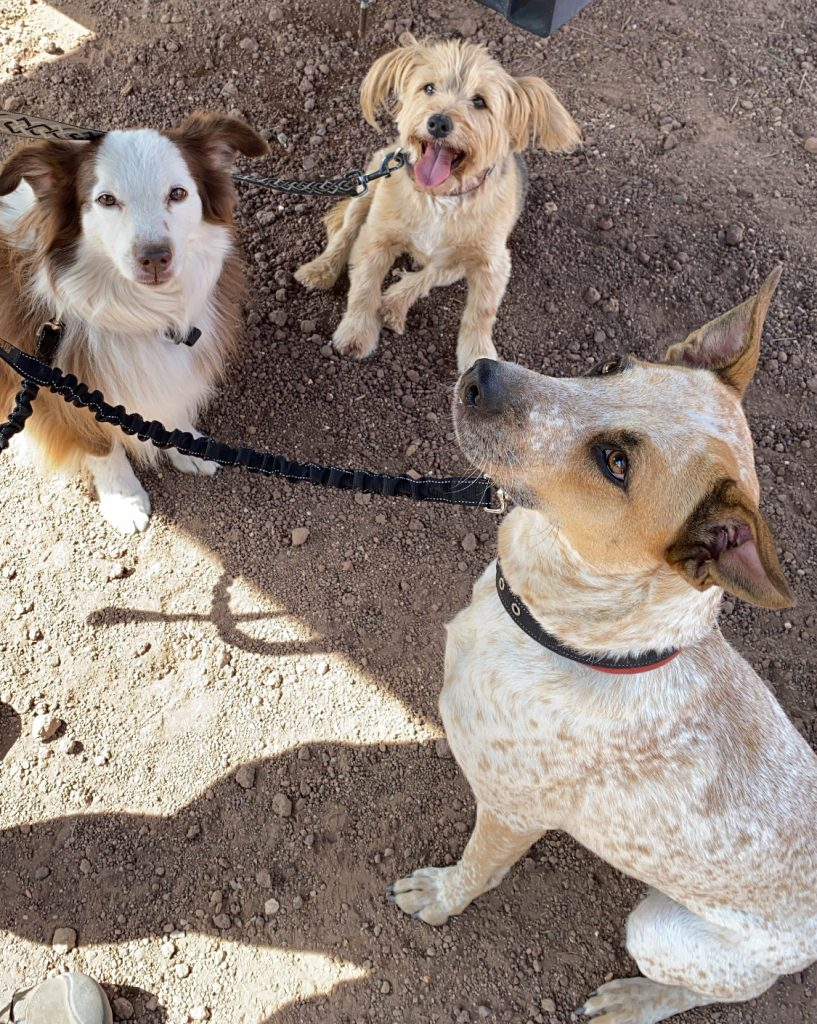 3 dogs hang out at Overland Expo